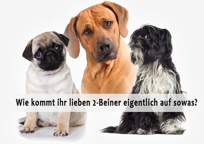 Aus Liebe zum Hund